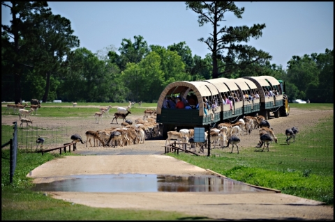 Global Wildlife Center